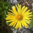 Auf dem Weg lassen sich die unterschiedlichsten Blumensorten finden