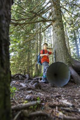 Wie klingen verschiedene Hölzer? Finde es heraus beim Baumtelefon!