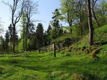 Durch den Oberpfälzer Wald