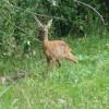 Wer genau hinsieht kann auch die Fauna entdecken. Dieses Reh hat mir wohl beim Wandern zugesehen.