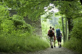 Der Rheinsteig verläuft durch mehrere Waldstücke.