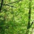 Durch die Wälder von Arzl