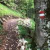 Der Rundweg am Feuerkögerl ist ein gut sichtbarer Wanderpfad.