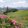 Farbenfrohe Natur während der Wanderung