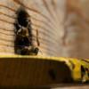 Reither Bienenlehrpfad