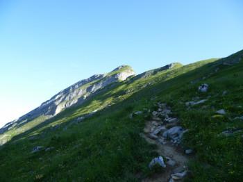 Wer Glück hat, der entdeckt auf dem felsigen Gelände der Kanisfluh einen der Steinböcke.