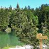 Am Badersee