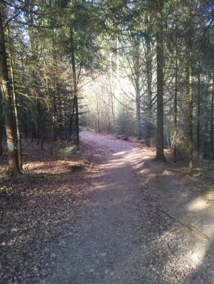 Idylischer Waldweg - auch mit normalem Schuhwerk kein Problem