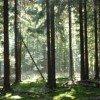 Die Pfade führen durch das Unterholz