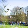 Am Affenberg lebt auch eine frei fliegende Brutkolonie von Weißstörchen.