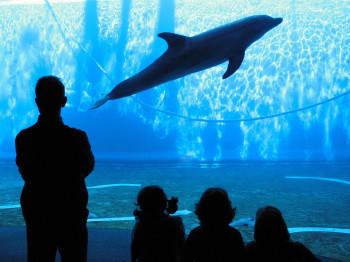 Das Aquarium von Genua ist eines der größten in Europa.