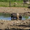 Bei jeder Tierart wird auf eine artgerechte Haltung mit ausreichend großen Freianlagen geachtet.