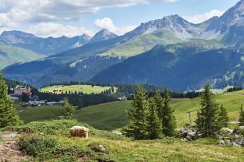 Das Bärengehege befindet sich auf über 2000 Metern Höhe.