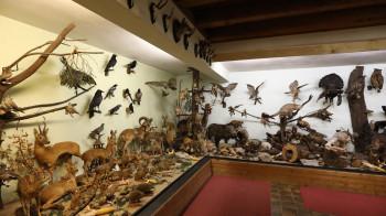 Das Waldmuseum