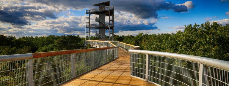 Der Weg startet am Turm und führt dich entlang der Baumkronen.