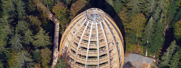 Der Baumturm aus der Luft