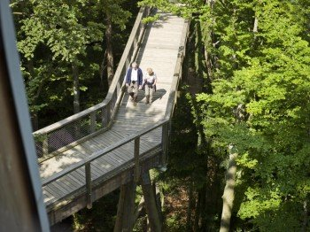 Der Pfad führt dich in luftiger Höhe durch den Wald.