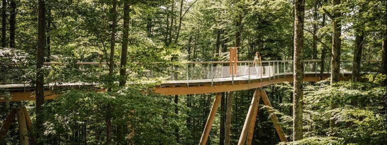 Der Baumwipfelpfad Neckertal ist rund 500 Meter lang.