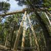 Der Pfad ist bis zu 23 Meter hoch.