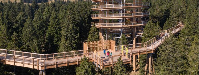 In 20 Metern Höhe schlängelt sich der Pfad zum Aussichtsturm.