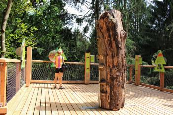 An den didaktischen Stationen lernst du mehr über den Wald und die Region.