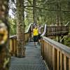 Der Baumzipfelpfad befindet sich in bis zu 30m Höhe und lässt dich die Natur hautnah erleben.