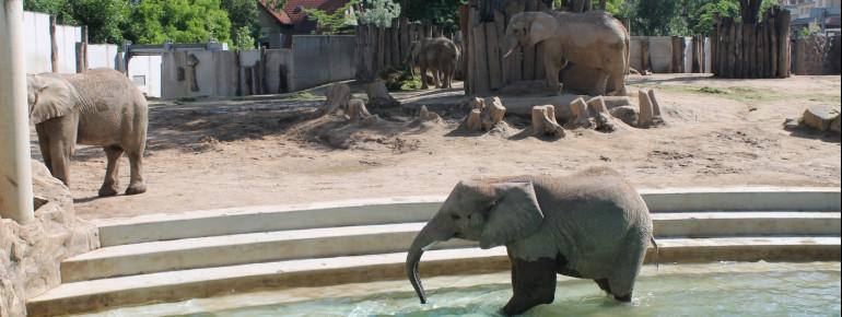 Die Elefanten leben auf einer 3000 Quadratmeter großen Außenanlage.