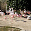Flamingos im Bird Park in Kennedy Grove.