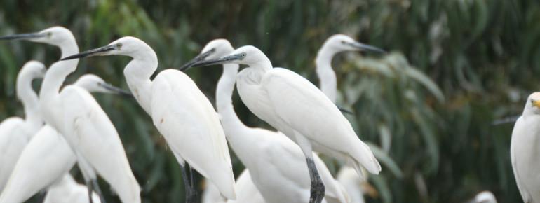 Über 200 Vogelarten sind hier zu Hause.