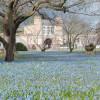 Im Frühling haben die Blausterne im Botanischen Garten in Karlsruhe Blütezeit. Die Wiese vor den historischen Glashäusern färbt sich dann blau.
