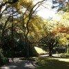 Weg im herbstlichen Botanischen Garten