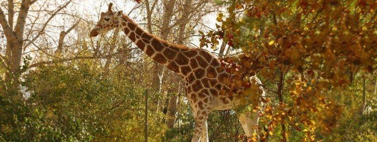 Der Zoo beherbergt über 800 Tiere