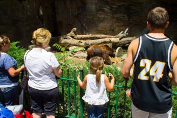 Garantierter Spaß für die ganze Familie: Bären, Affen, Giraffen, Löwen, Bisons und viele andere Tiere faszinieren Klein und Groß.