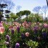 Blumenmeer in den Garten Tulln