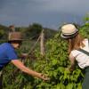 Am Einberghof werden gesunde Lebensmittel aus eigenem Anbau angeboten.