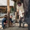 Dem Hufschmied bei seiner Arbeit zuschauen können große und kleine Besucher im Rahmen einer Führung.