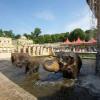 Lerne im Erlebnis-Zoo viele faszinierende Eigenschaften der asiatischen Elefanten kennen.