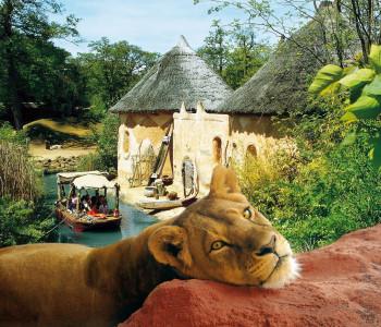 Auch die größte lebende Löwenart, den Berberlöwe, kannst du im Erlebnis-Zoo bestaunen.