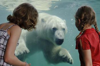 Über große Panoramafenster kannst du Eisbären auf Tauchstation beobachten.