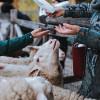 Die tierischen Bewohner des Familyparks freuen sich immer über Futter.