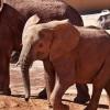 Elefanten im Fuerteventura Oasis Park
