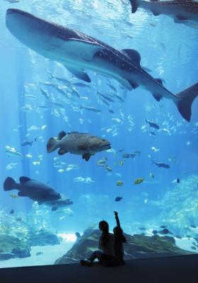 Tauche ein in die magische Unterwasserwelt des Georgia Aquariums.