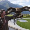 Jeweils 30 Minuten vor und nach der Flugvorführung kannst du die Tiere in den Volieren besichtigen.