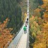 Die Hängebrücke Geierlay liegt mitten im Hunsrück.