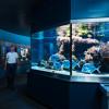 Im Aquarium erwarten dich 38 Schaubecken.