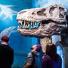 Beeindruckend ist der Kopf eines T-Rex in der Saurierhalle.