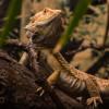 Hier kannst du Reptilien aus nächster Nähe beobachten.