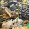 Das Haus der Natur informiert dich über die Artenvielfalt der Region.