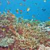 Bunte Korallenriffs bieten zahlreichen Fischarten ein Zuhause.