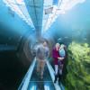Der Halbtunnel ermöglicht es den Besuchern regelrecht in die Unterwasserwelt einzutauchen.